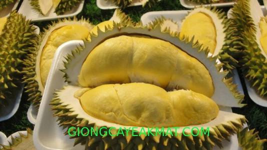 giống sầu riêng Dona cơm vàng hạt lép