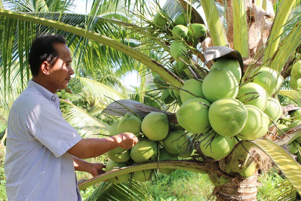trồng và chăm sóc cây dừa dứa