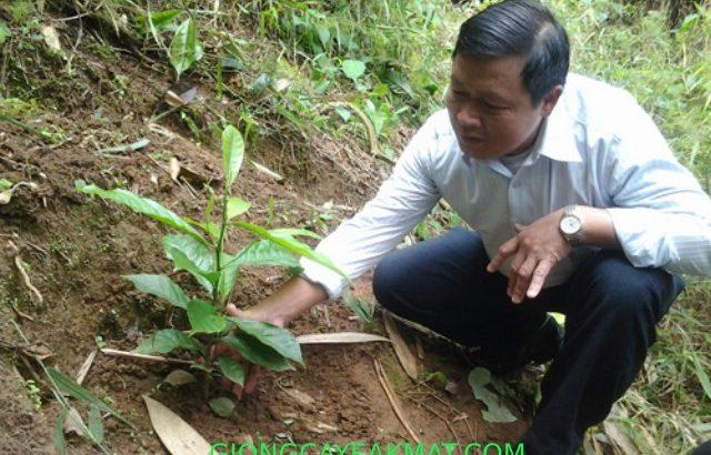 trồng cây Dỗi Xanh