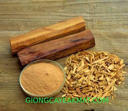 cây gỗ Đàn Hương Ấn Độ