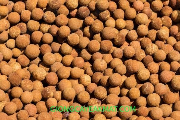 lưu ý khi trồng đàn hương Ấn Độ